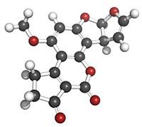Mögelgift Aflatoxin från mögel Aspergillus