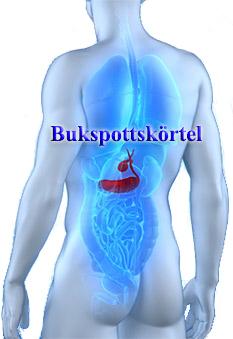 Bukspottskörtel avger livsviktigt insulin
