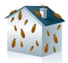 I hus med fukt finns ofta skadeinsekter