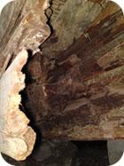 Kraftig bjälke förstörd av hussvamp