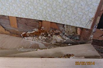 Omfattande hussvampsangrepp i väggkonstruktion