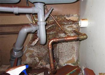 Svampen växer under diskbänken. Sporer ses på rören