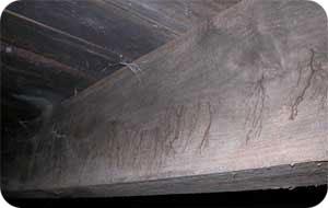 Takstolen på denna vind visar upp källarsvamp