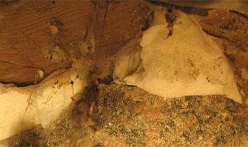 I denna krypgrund hade man isolerat golvbjälklaget med karbamidskum