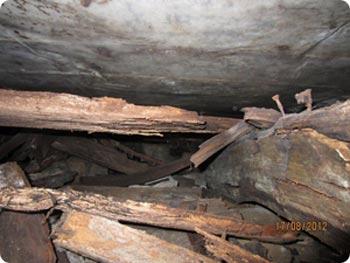 Krypgrund där hussvamp finns