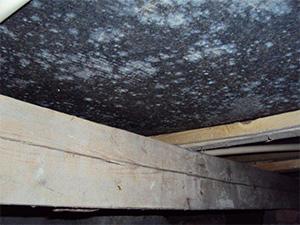 Mögelsporer i krypgrund sprids till inomhusmiljön