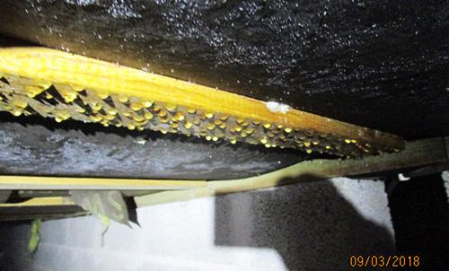 Droppar av kondens på blindbottenbräda och asfaboard i krypgrund