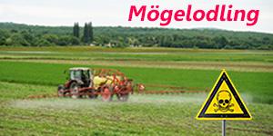 Fungicider och herbicider skapar farligt mögel