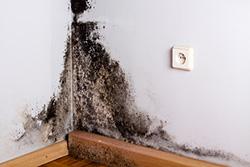 Synligt mykotoxinavgivande mögel i hus