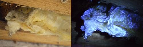 Inspektionslampa också kallad mögeldetektor i bruk.