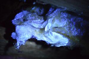 Fluorescens av mögel samt mögelgift