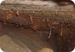 Torpargrund med skador av mögel och rötsvamp