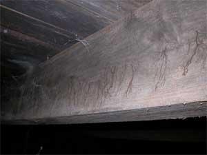 Mögelskada och rötsvamp på takstol
