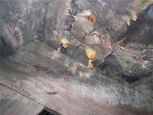 Fruktkropp av källarkantarell funnen på en vind