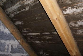 Rikligt med mögel på råspont men ej på takstol