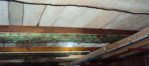 Markant vitmögelskada i källare