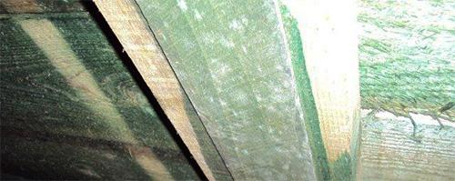Vitmögel på byggnadsmaterial behandlat med högtoxiskt träskyddsmedel, i krypgrund