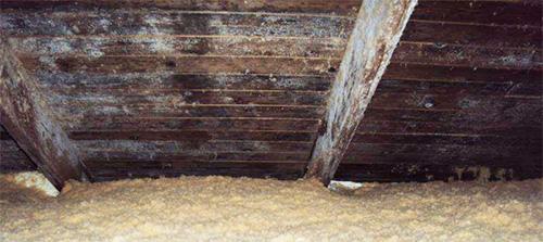 Mycket kraftig skada på vind av svartmögel och vitmögel