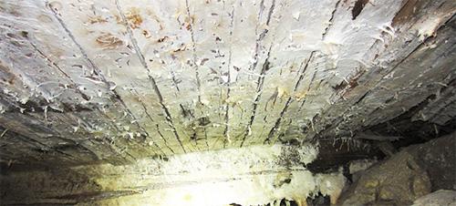 Påväxt av hussvamp ej att förväxla med vitmögelpåväxt