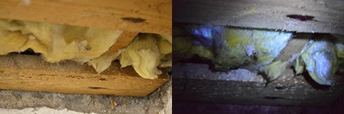 Mögel kan ibland fås att lysa upp under skenet av mögeldetektorn och inspektionslampan